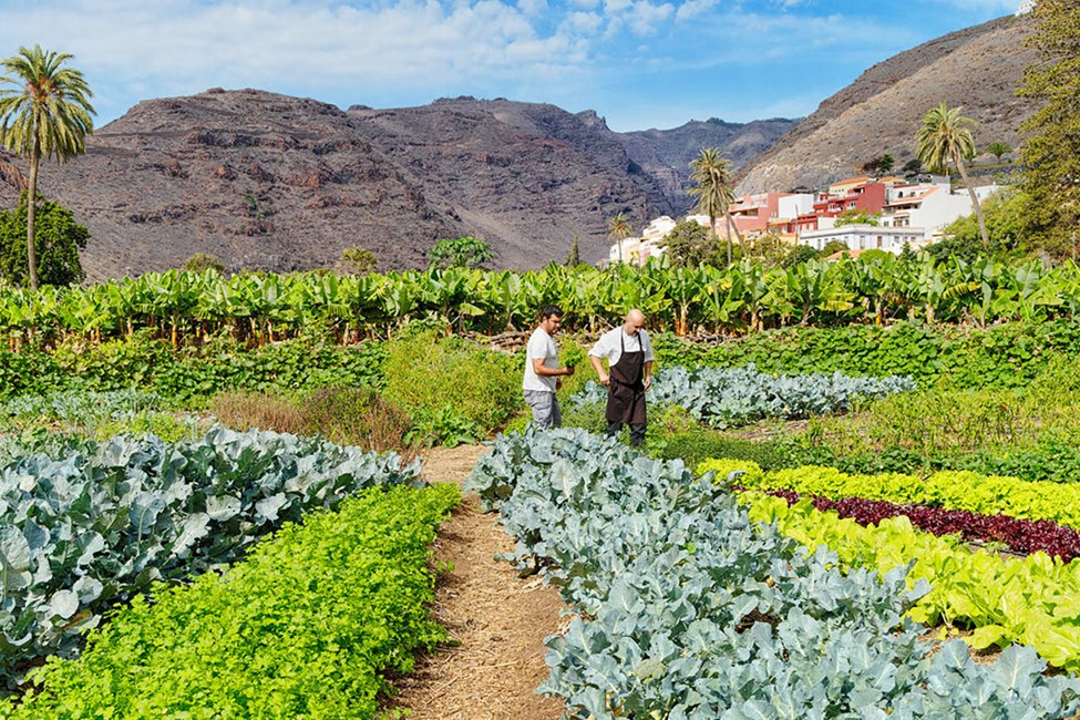 Hotellets økologiske have