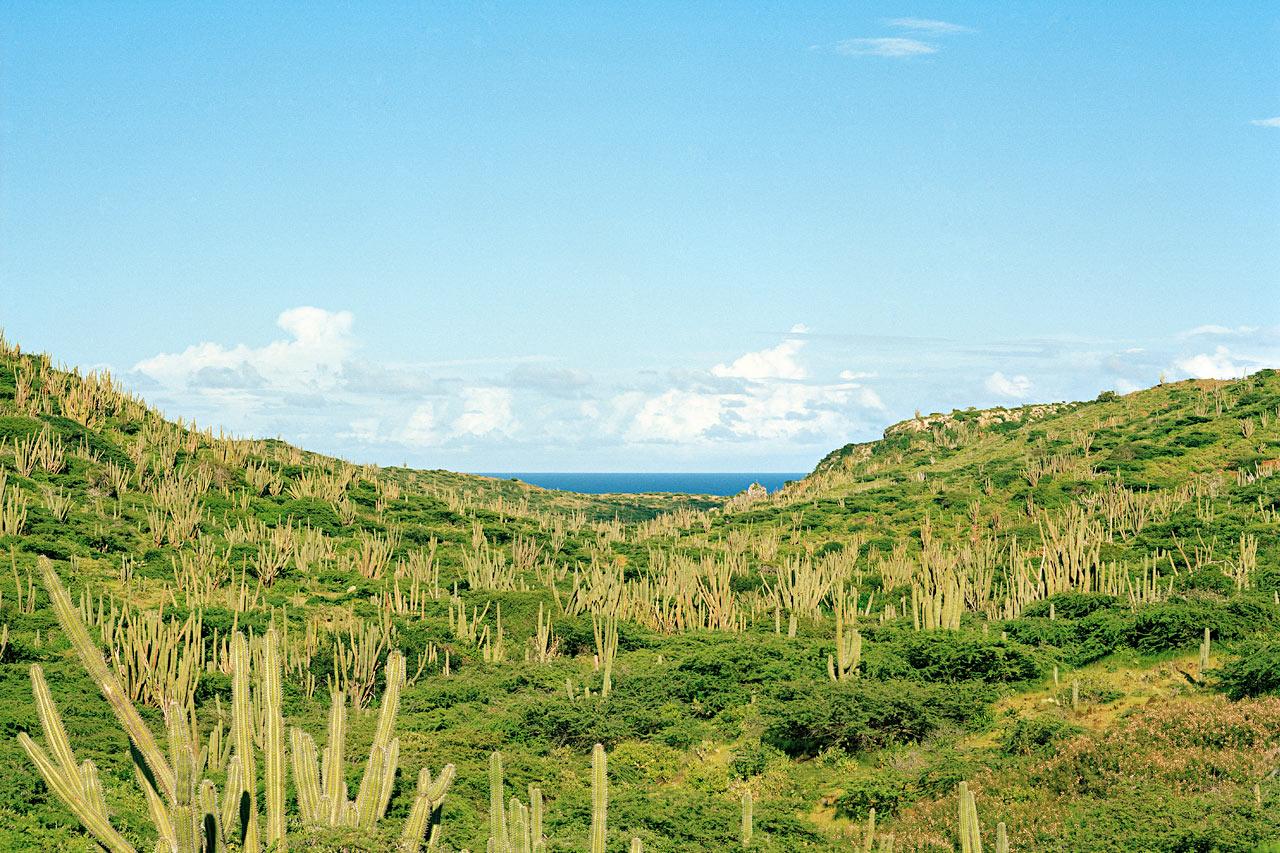 Aruba - Billeder hos Spies
