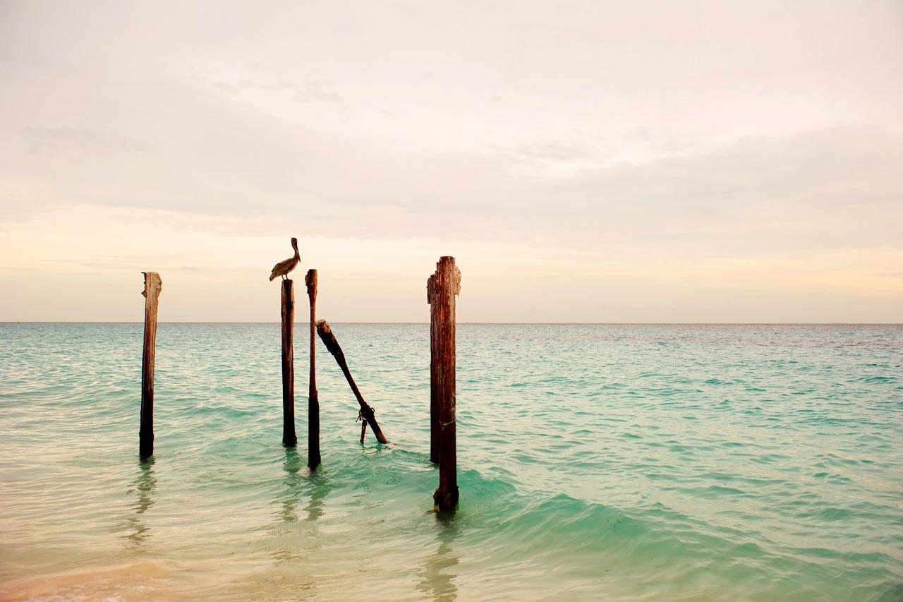 Aruba - Druif Beach