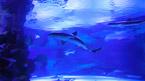 Antalya Aquarium (kan bestilles hjemmefra)