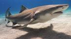 Hvor er hajerne? (kan bestilles hjemmefra)
