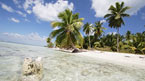 Saona Island - katamaran (kan bestilles hjemmefra)